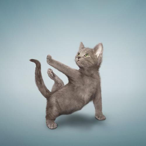 23ddc_yoga-cat
